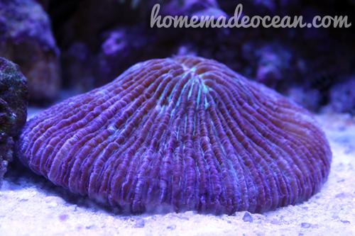 saltwater tank, corals, bright