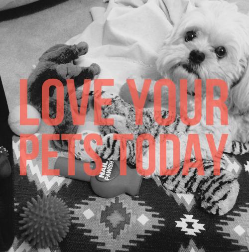 love you pets